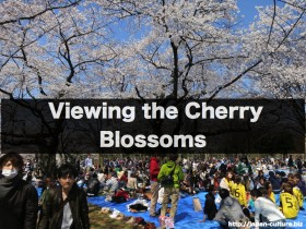 viewing the cherry blossoms.042